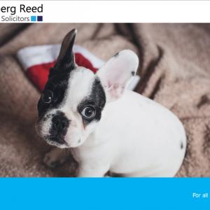 Christmas and avoiding the Social Media Dog house…